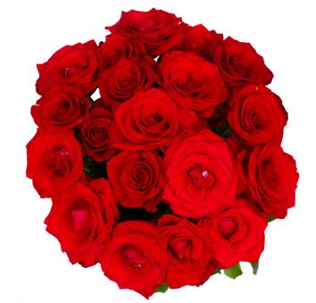 זר ורדים 66